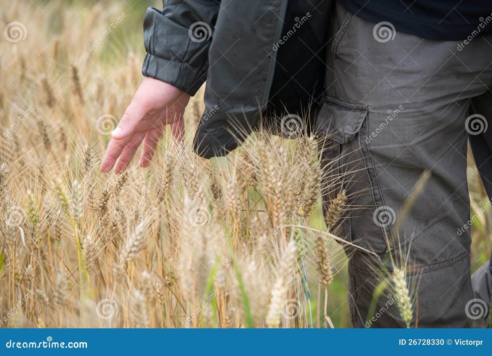 Uomo nel campo di frumento
