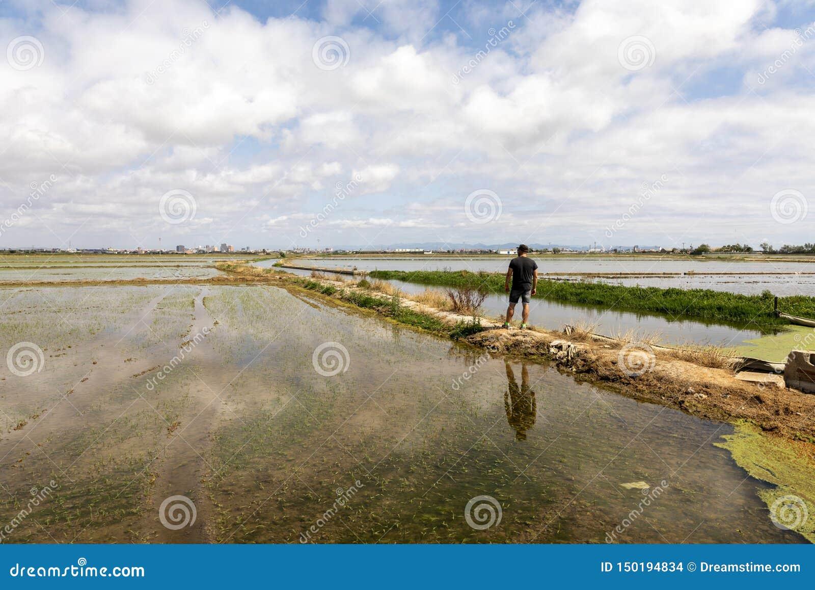 Uomo osservando le risaie vicino a Valencia