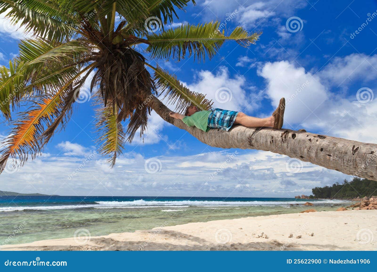 Uomo sulla palma in spiaggia tropicale fotografia stock for Disegni di casa sulla spiaggia tropicale