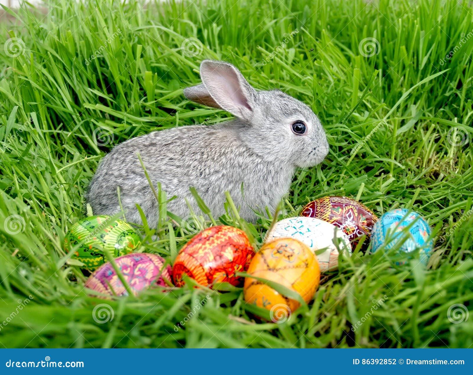Uova del coniglietto di pasqua