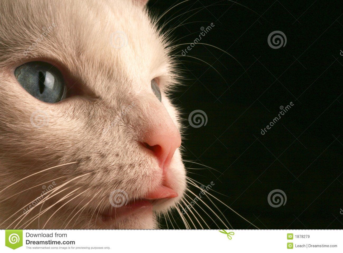 Up Close View of Cats Face