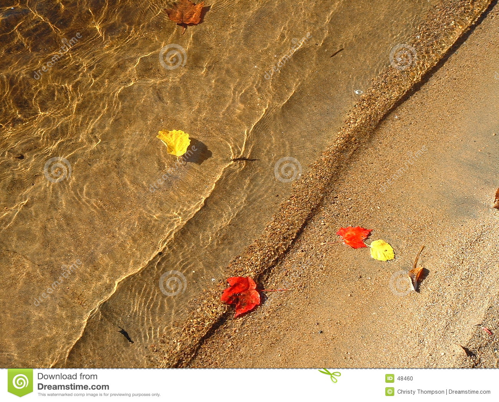 Upadek pływa liść wody