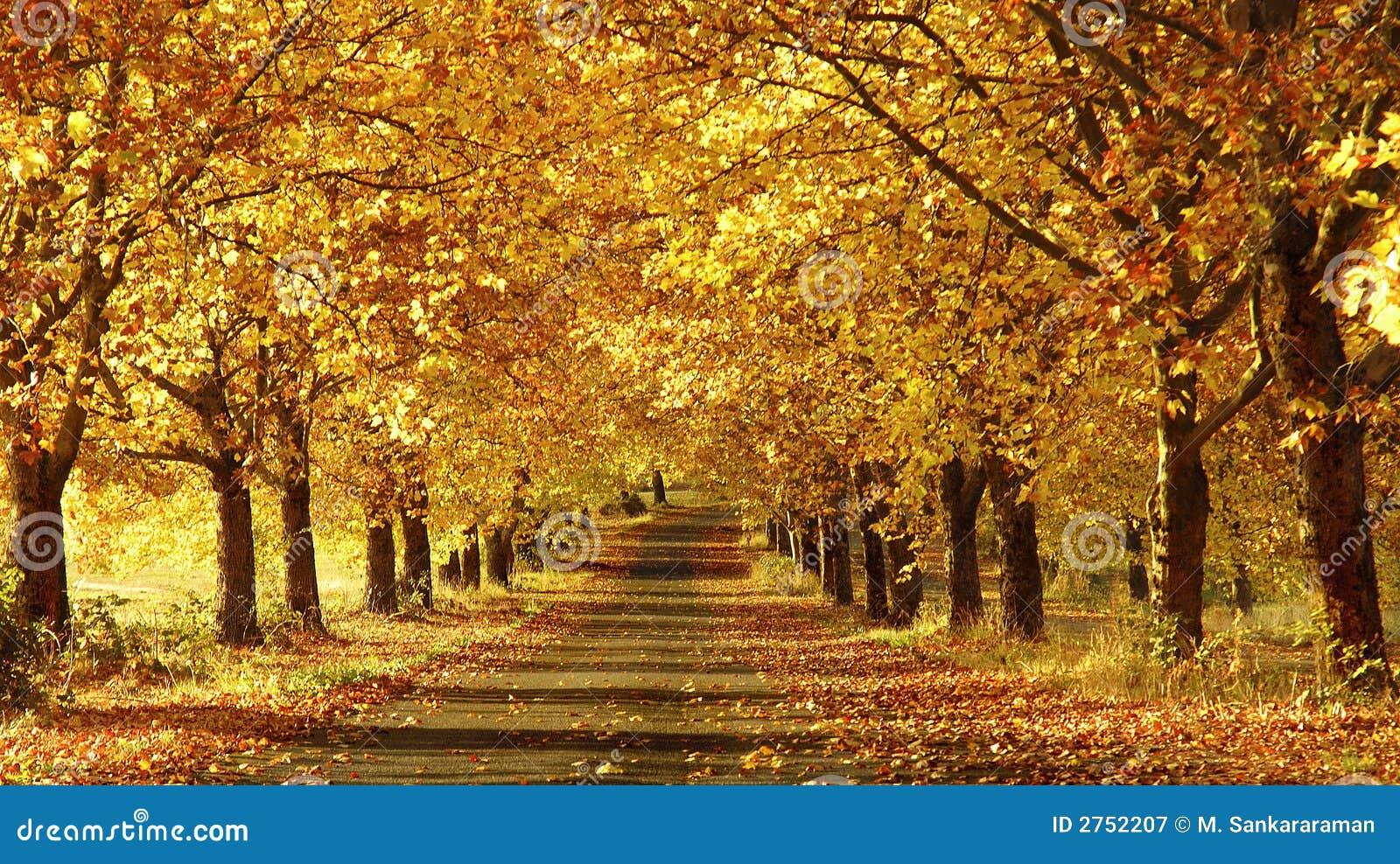Upadek   the pathway