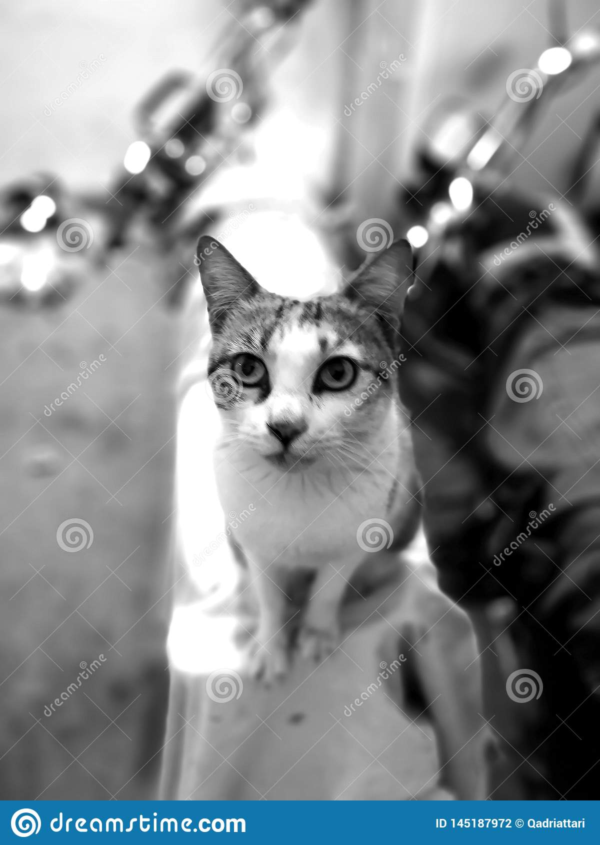 Uppehälle för kattfamilj i hemmet