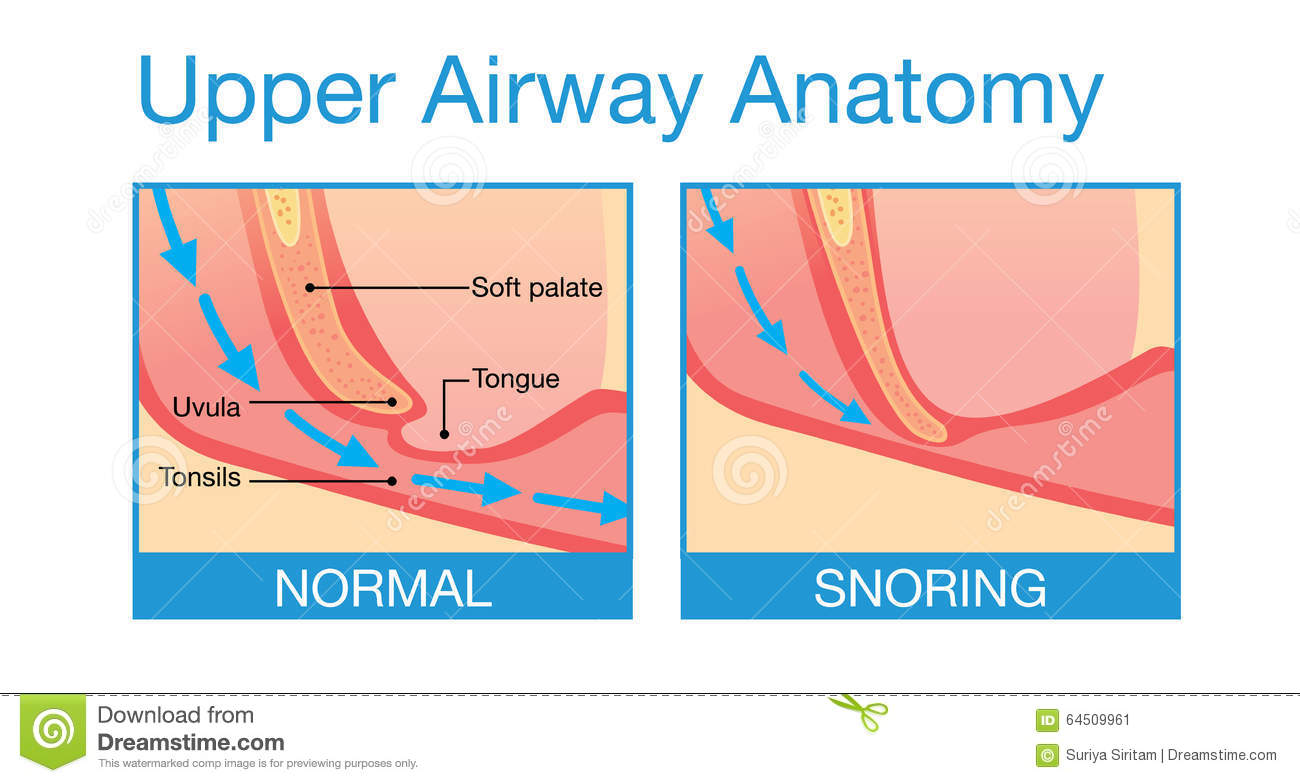 Upper Airway Human Anatomy In Sleeping Stock Vector Illustration