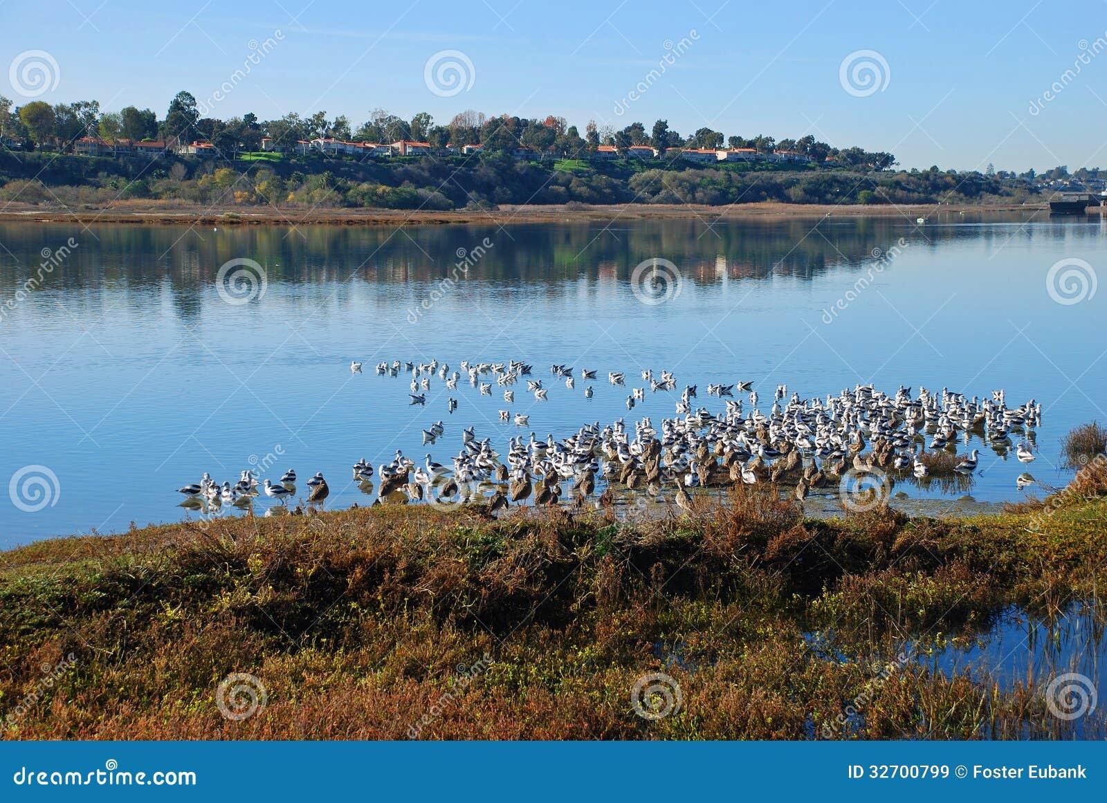 Newport Beach Nature Preserve