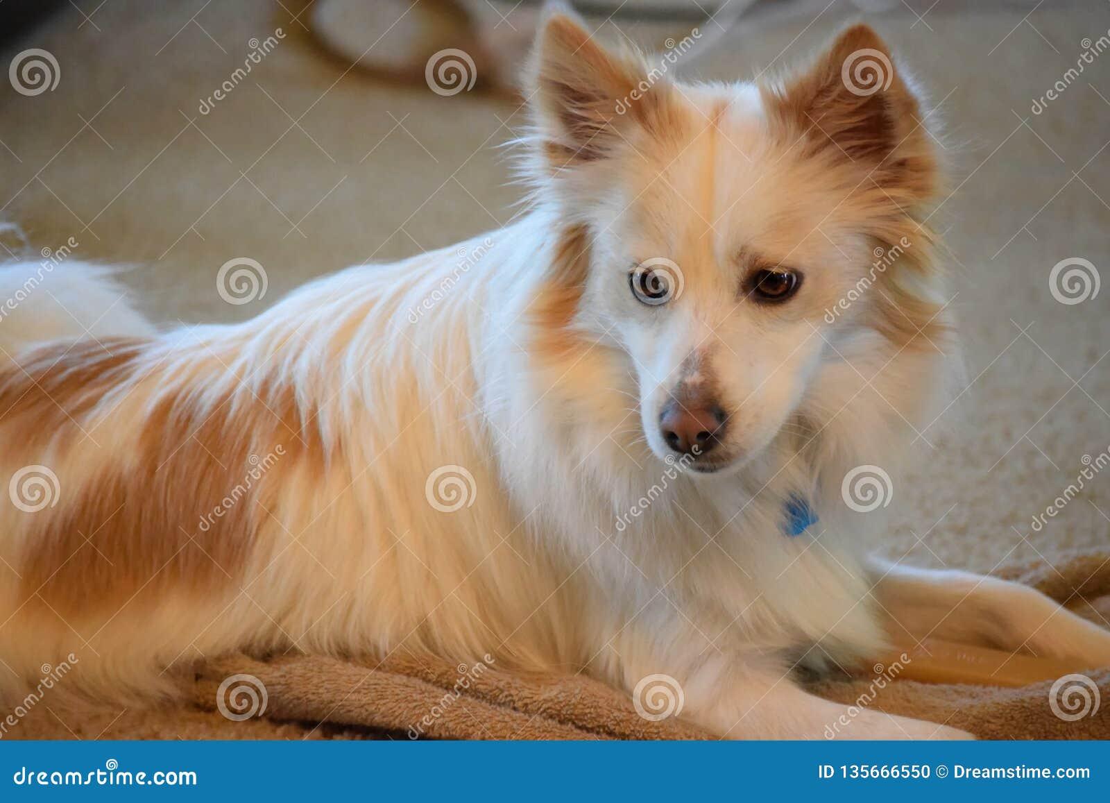 Uppmärksamma hundextraförmåner upp och att hålla ögonen på rummet