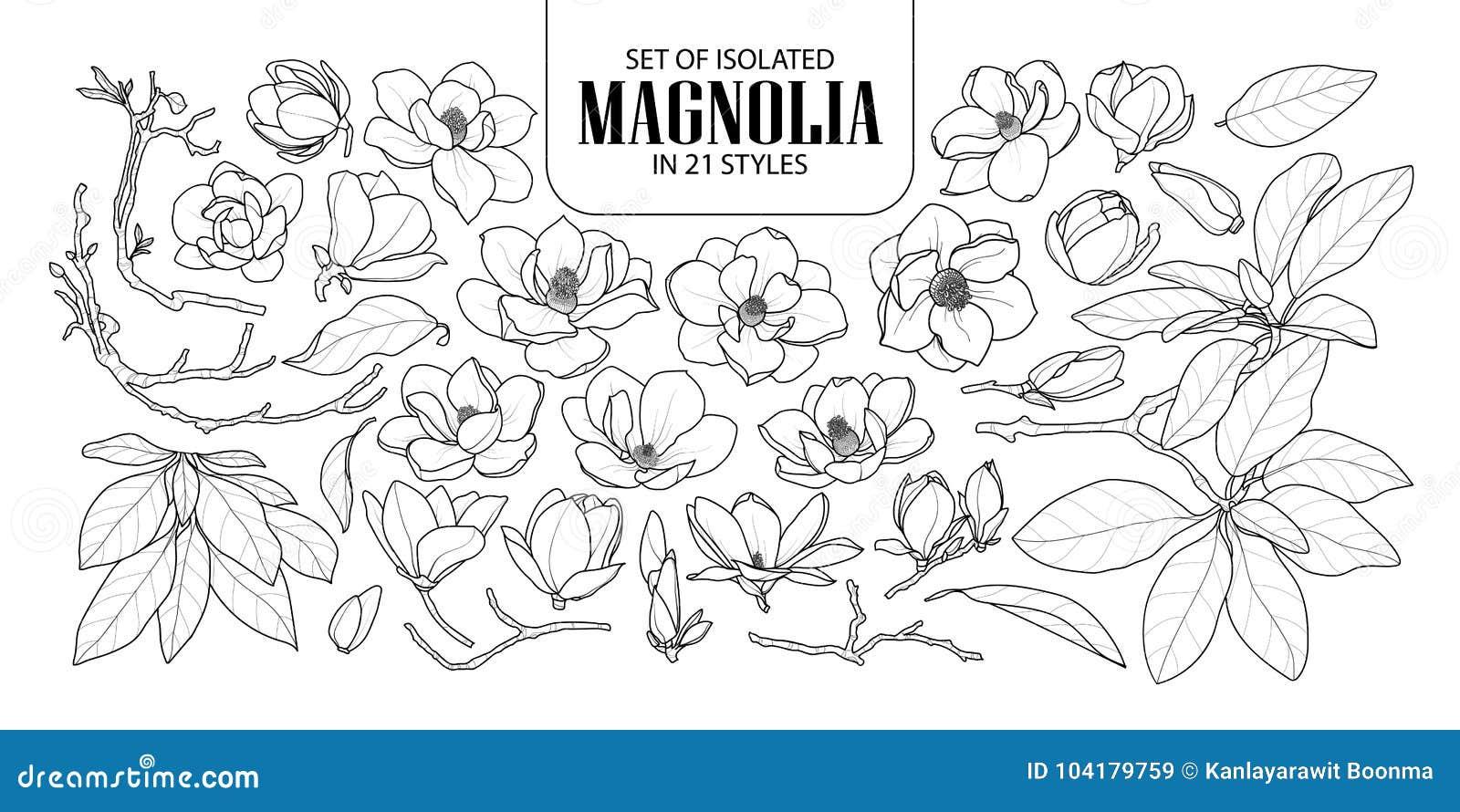 Uppsättning av den isolerade magnolian i 21 stilar Gullig hand dragen blommavektorillustration i svart vit nivå för översikt och