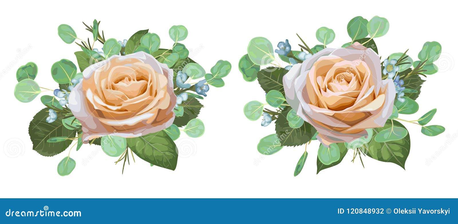 Uppsättning av härliga rosor för vektorvattenfärg med eukalyptussidor