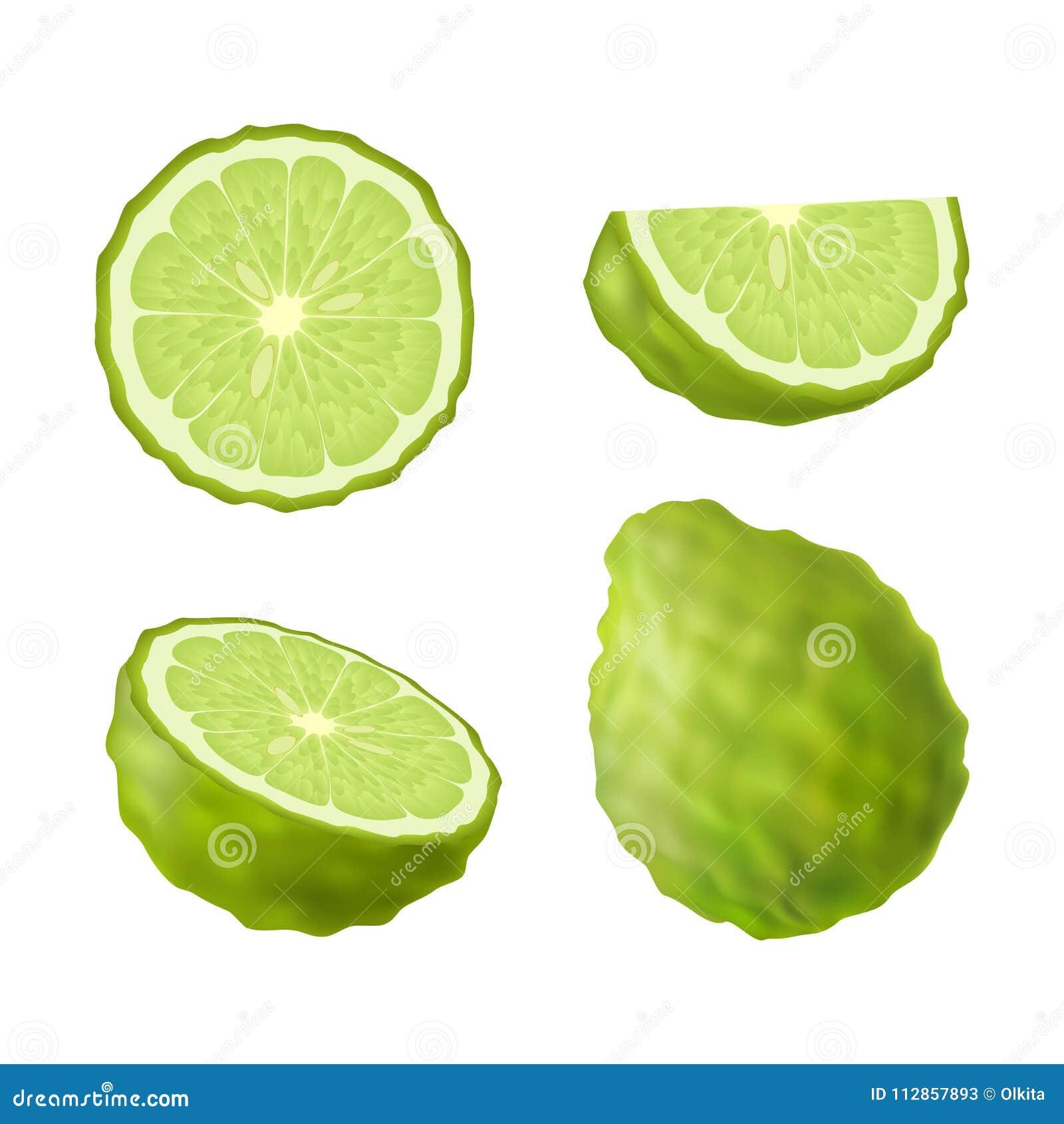 Uppsättning av isolerad kulör grön bergamot, kaffirlimefrukt, halva, skiva, cirkel och hel saftig frukt på vit bakgrund Realistis