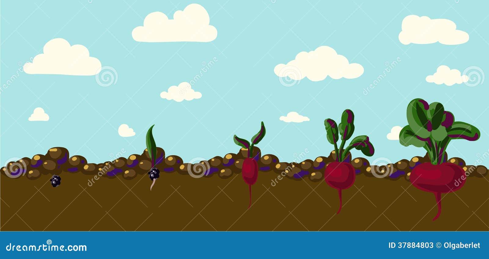Uppsättning av realistiska grönsakbeta