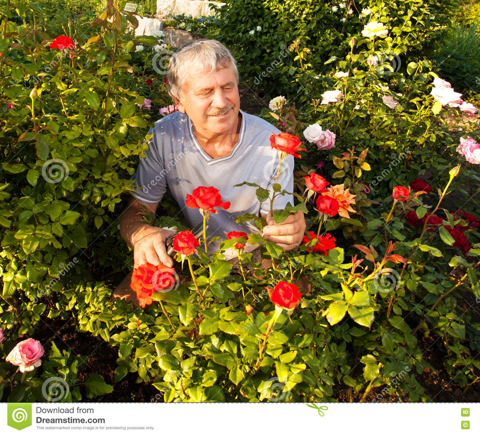 Uprawia ogródek mężczyzna