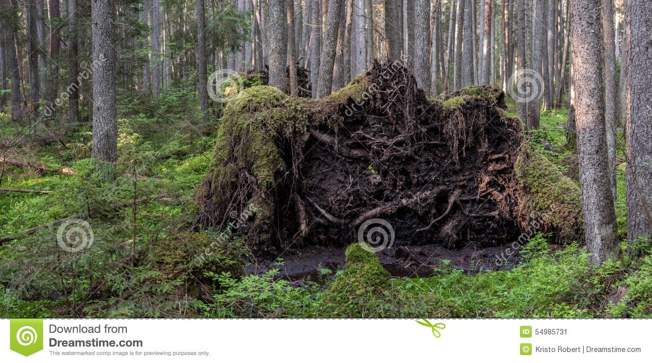 Uprooted trees