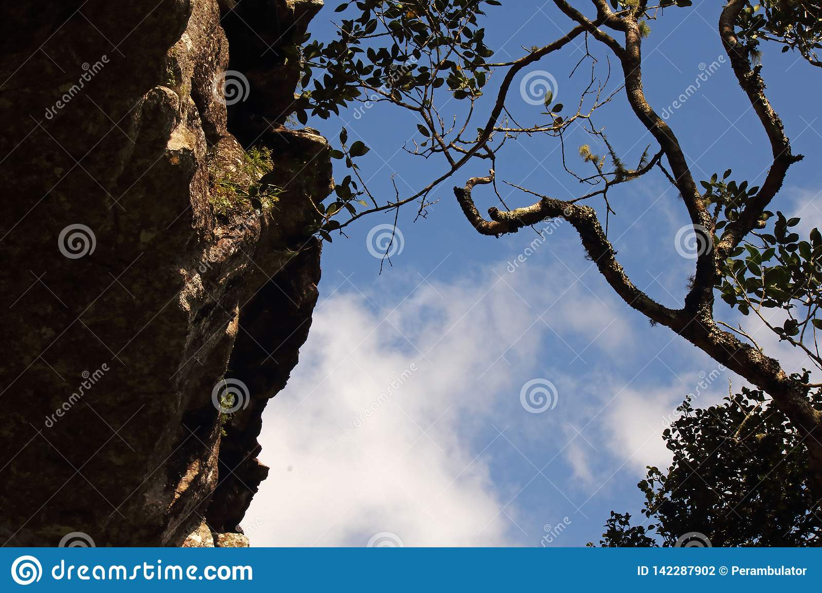 Upward View Of Rock Shelf And Tree Branch Stock Photo Image Of Background Contrasting 142287902