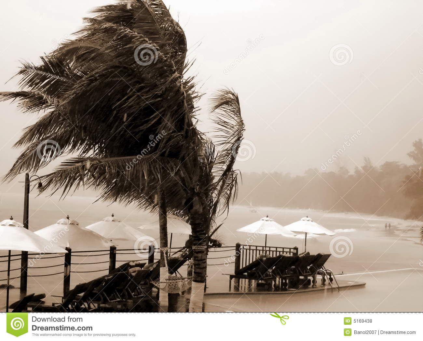 Uragano, ricorso, palme