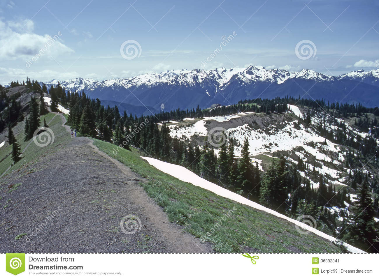Download Uragano Ridge immagine stock. Immagine di flora, washington - 36892841