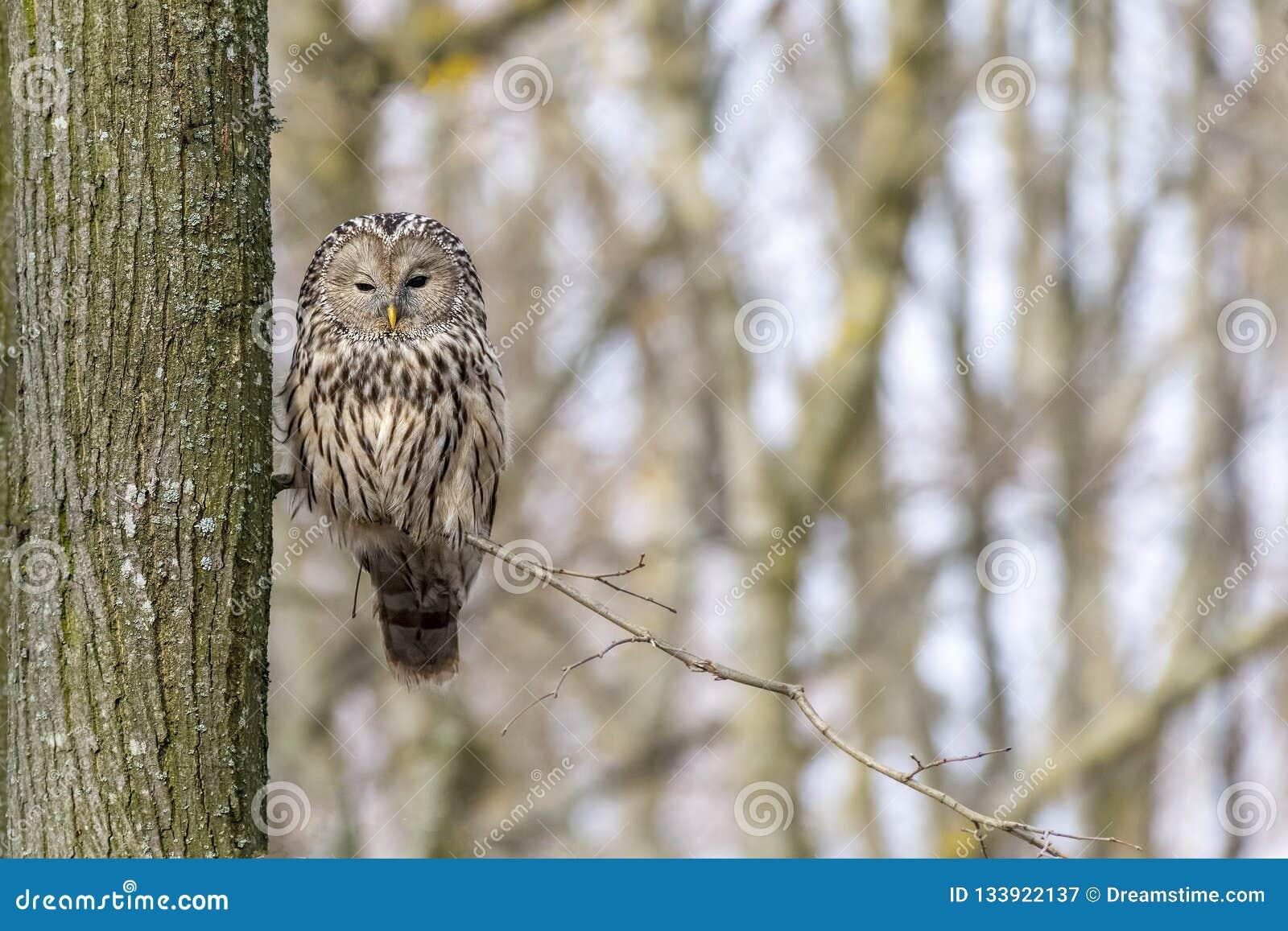 Peaceful Owl