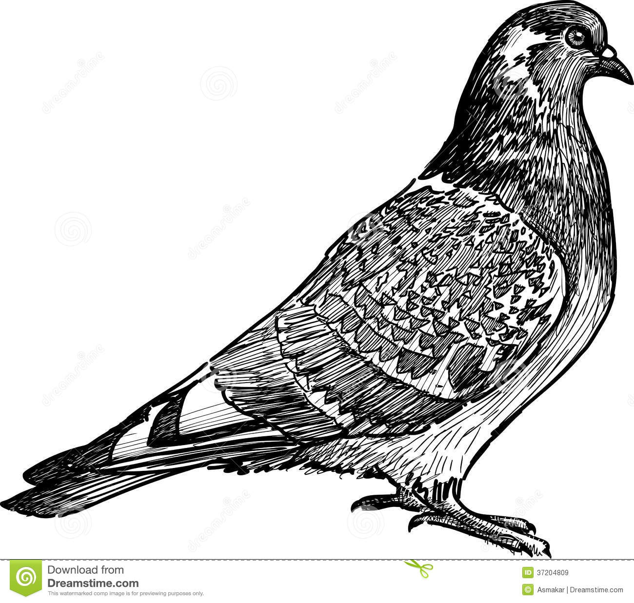Pigeon illustration - photo#38