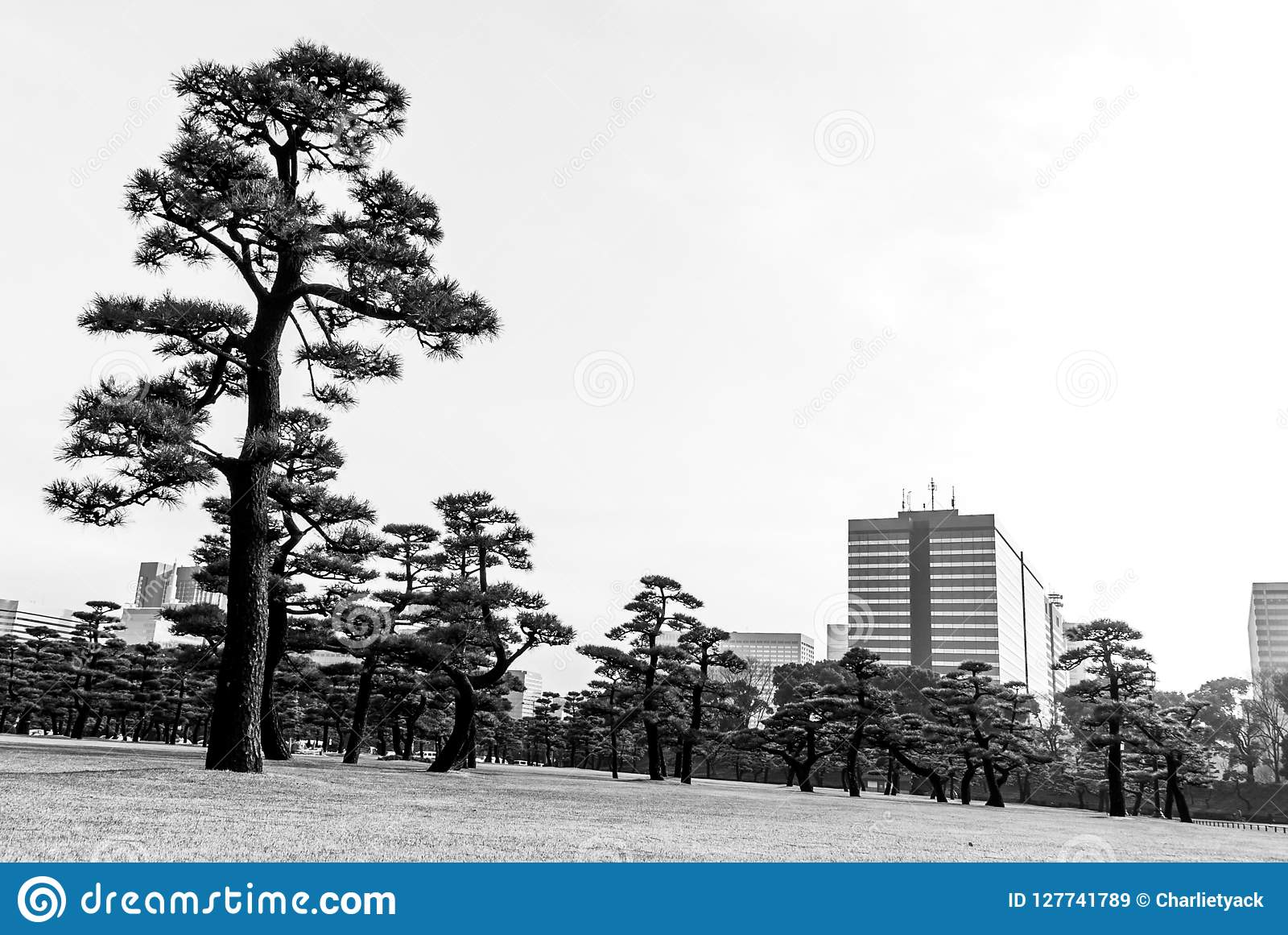 Urban Forest - Tokyo - city and trees meet