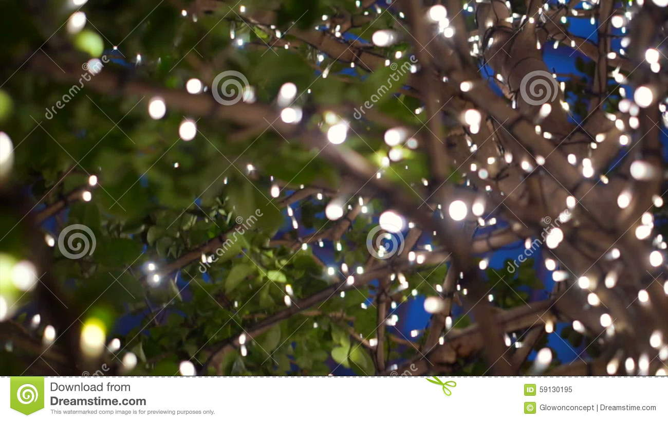 Night lights holiday - Urban Trees Decorated With Christmas Lights City Night Light For Holiday Blue Magical Christmas And New Year Decoration Stock Video Video 59130195