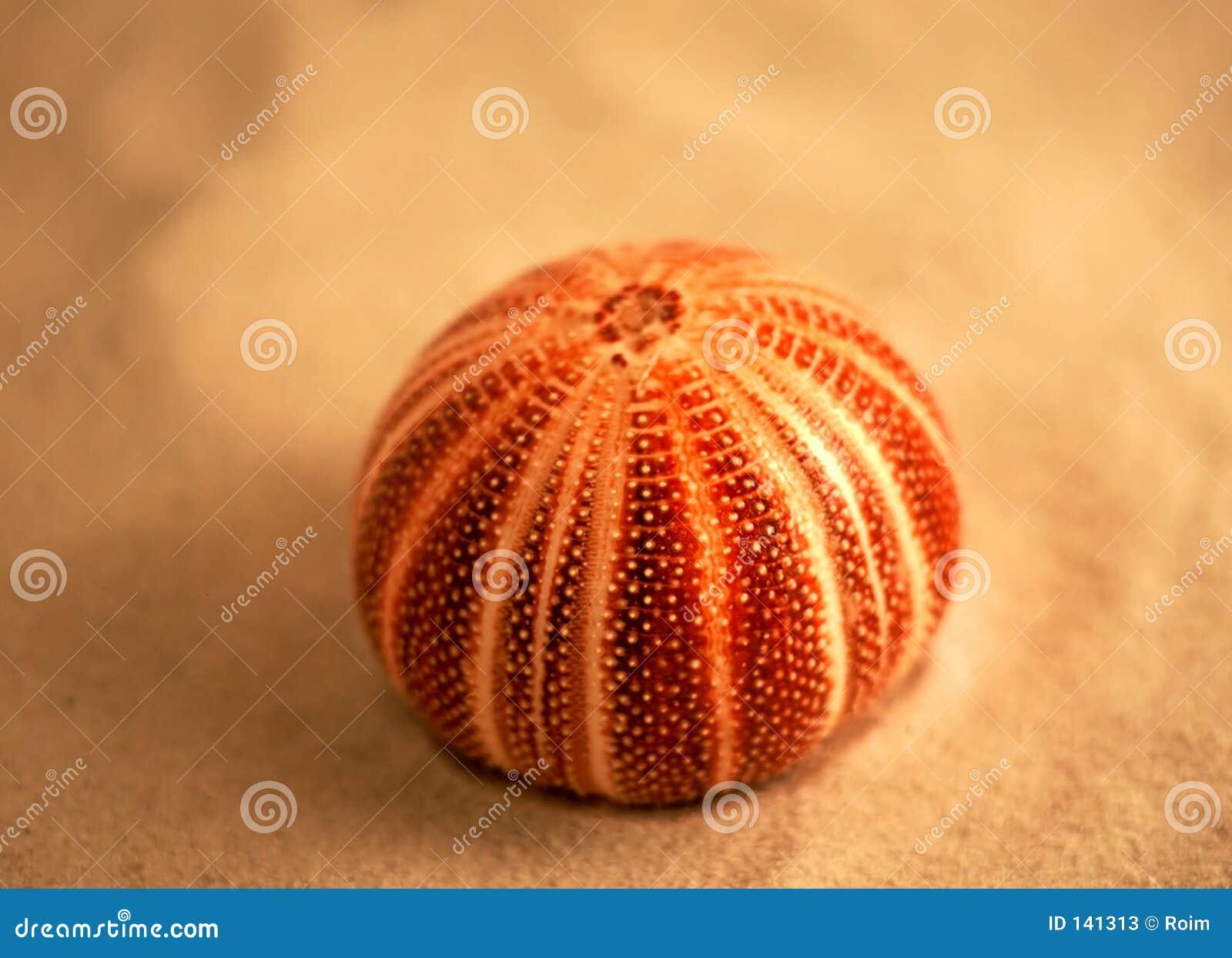 Urchin Stock Photos - Image: 141313