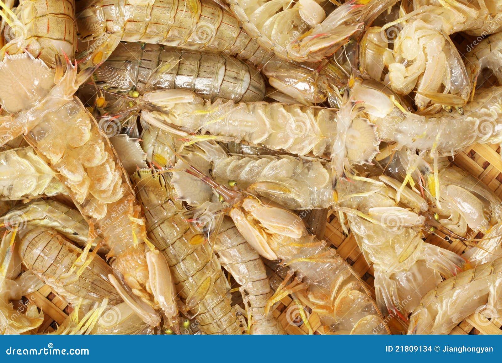 Urine Shrimp Stock Images - Image: 21809134