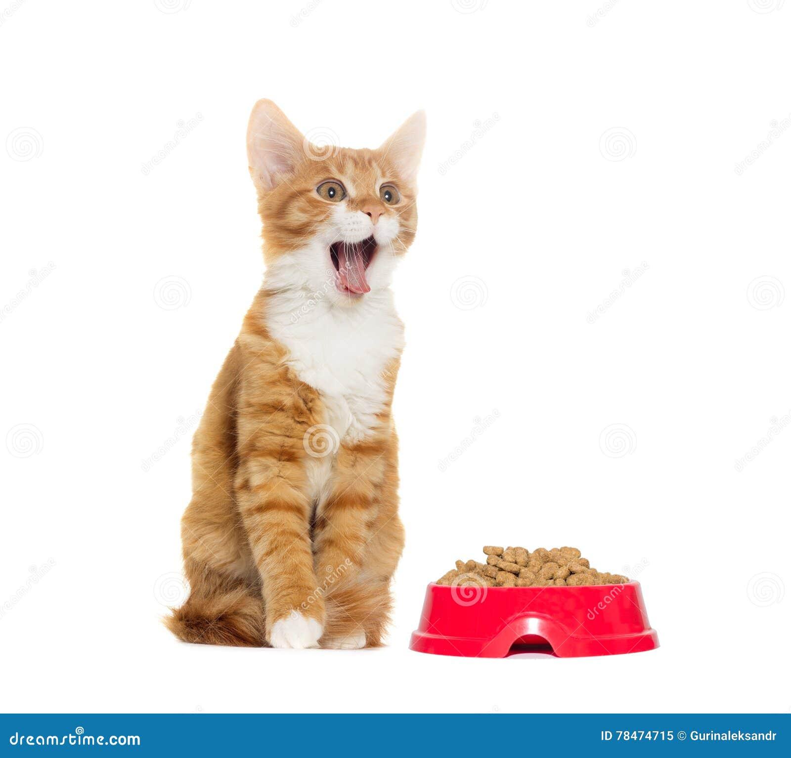 Urlo del gatto fotografia stock immagine 78474715 - Immagine del gatto a colori ...