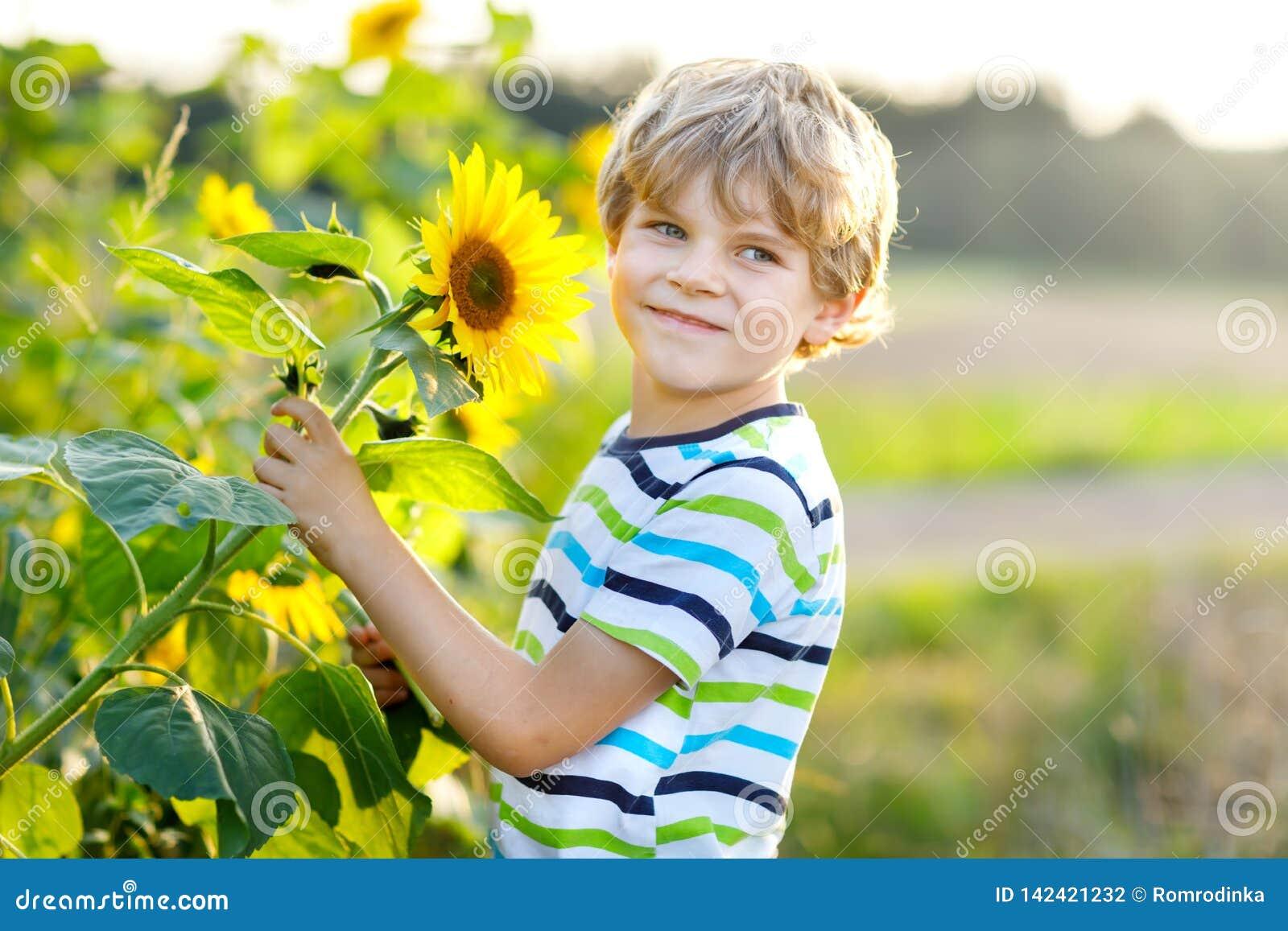 Urocza mała blondynu dzieciaka chłopiec na lato słonecznika polu outdoors Śliczny preschool dziecko ma zabawę na ciepłym lato wie