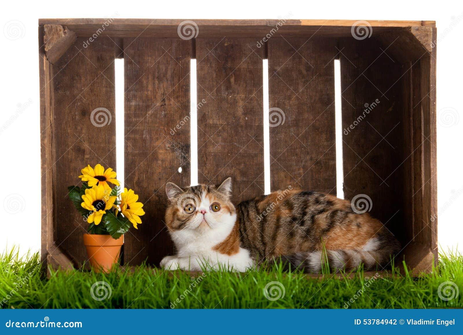 Uroczego kota drewniany pudełko odizolowywający na białym tle