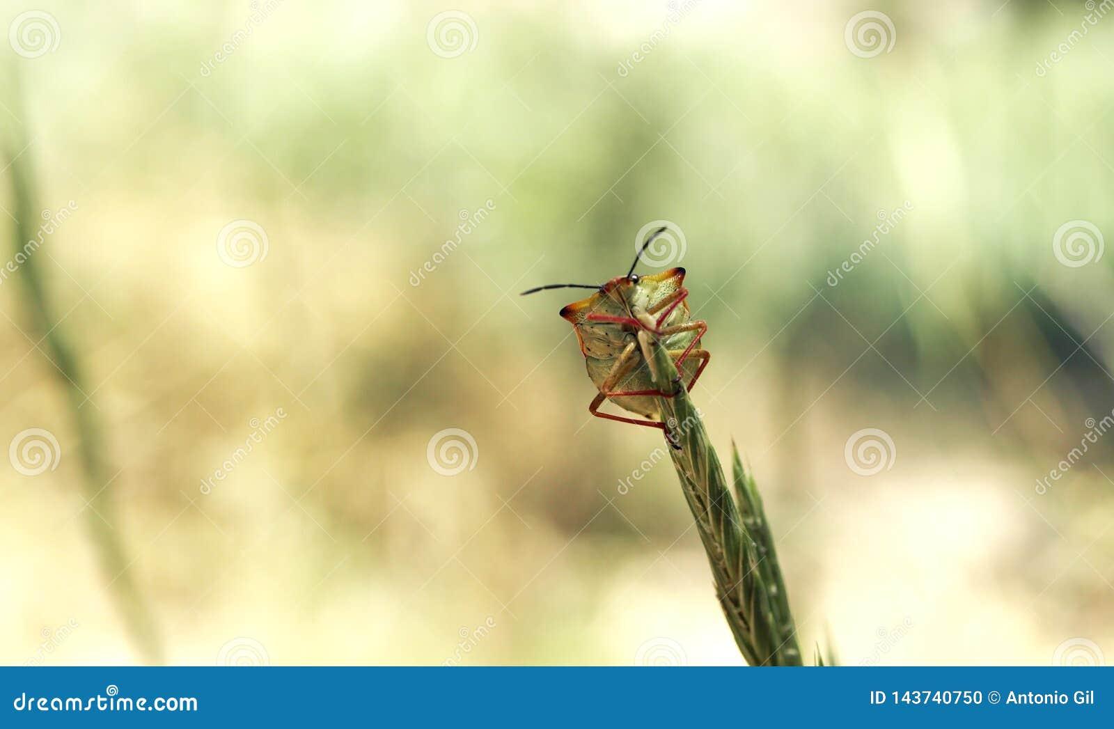 Uroczy insekt makro-