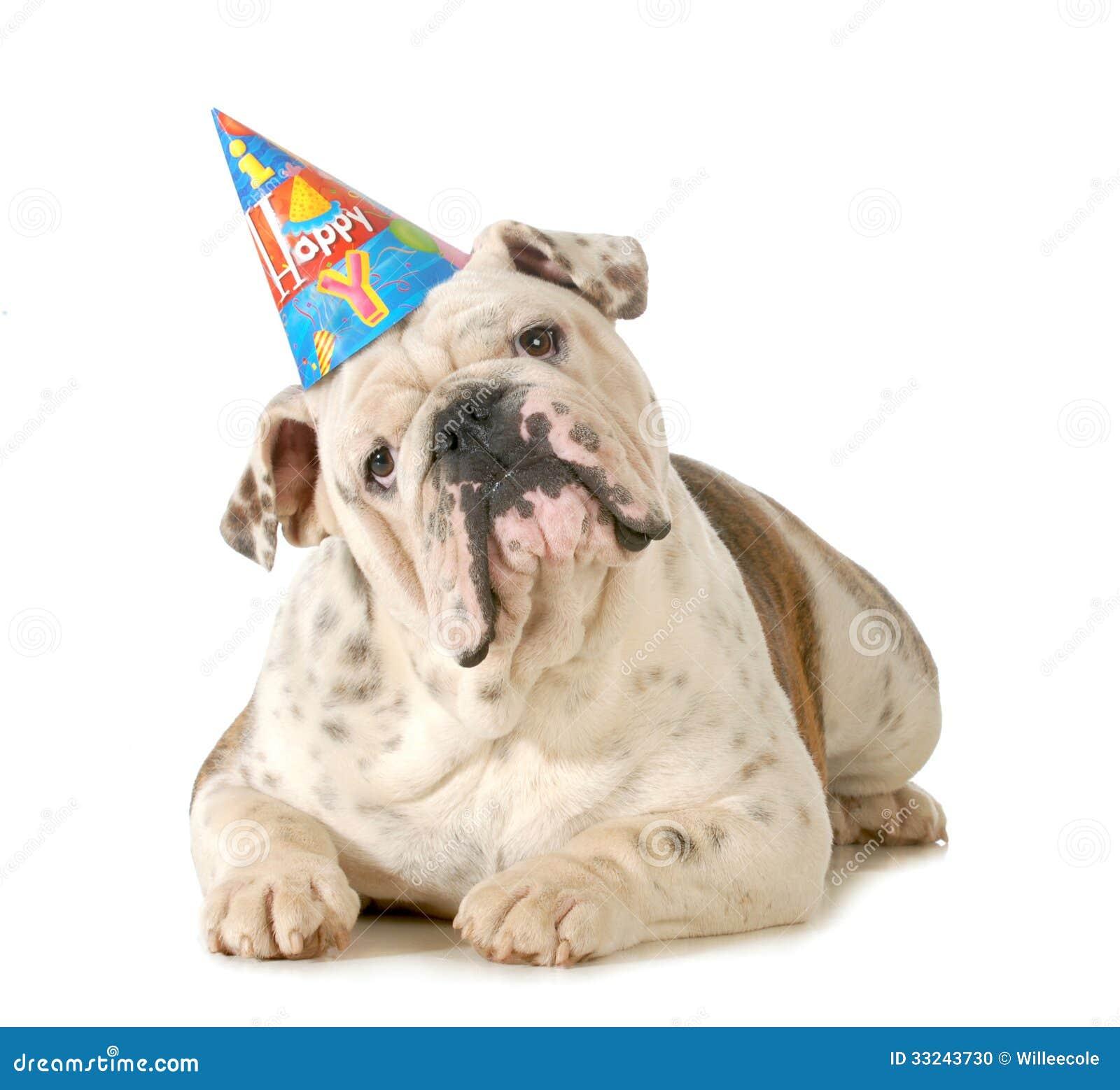 Urodziny pies