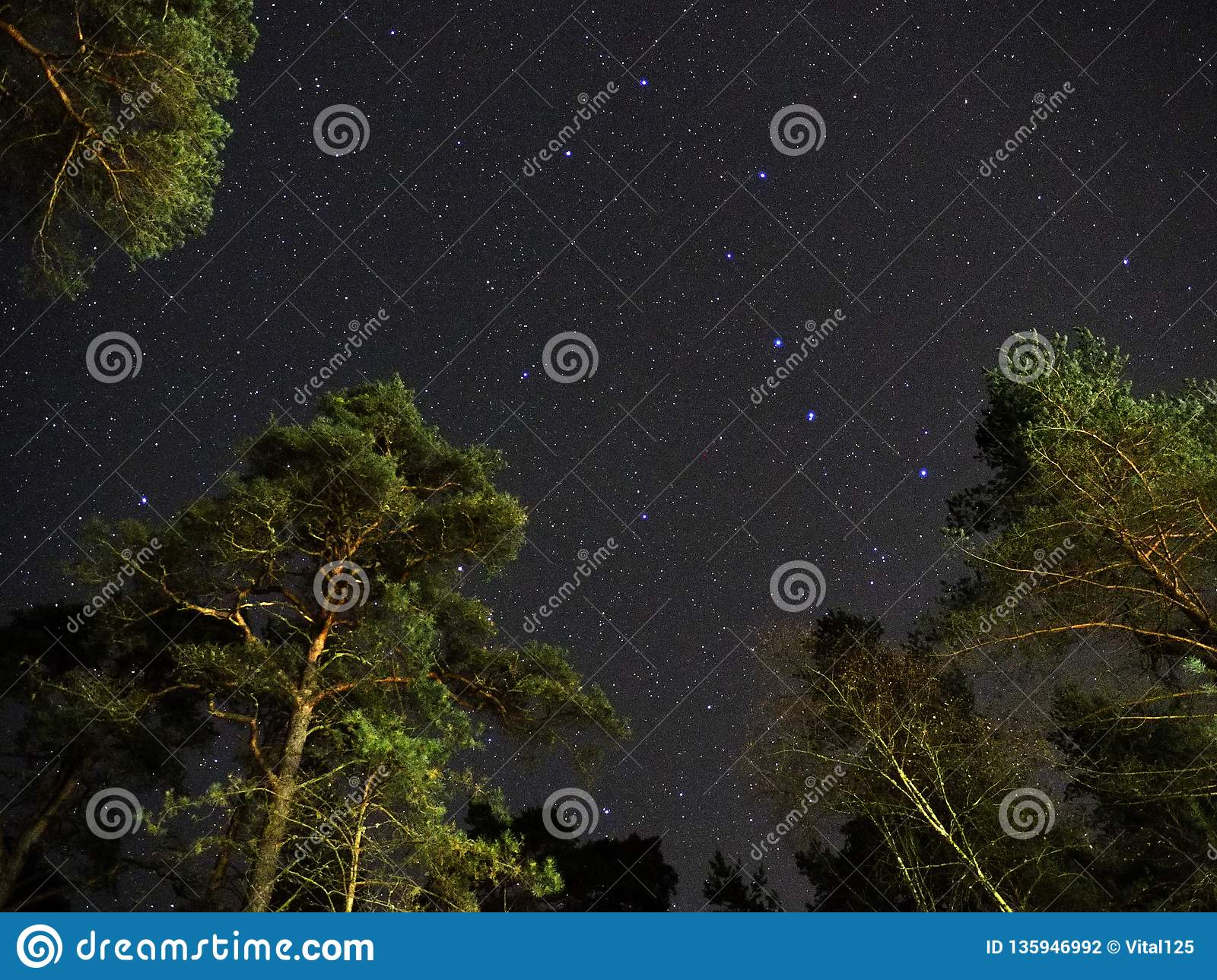 Big dipper stars on night sky over green forest