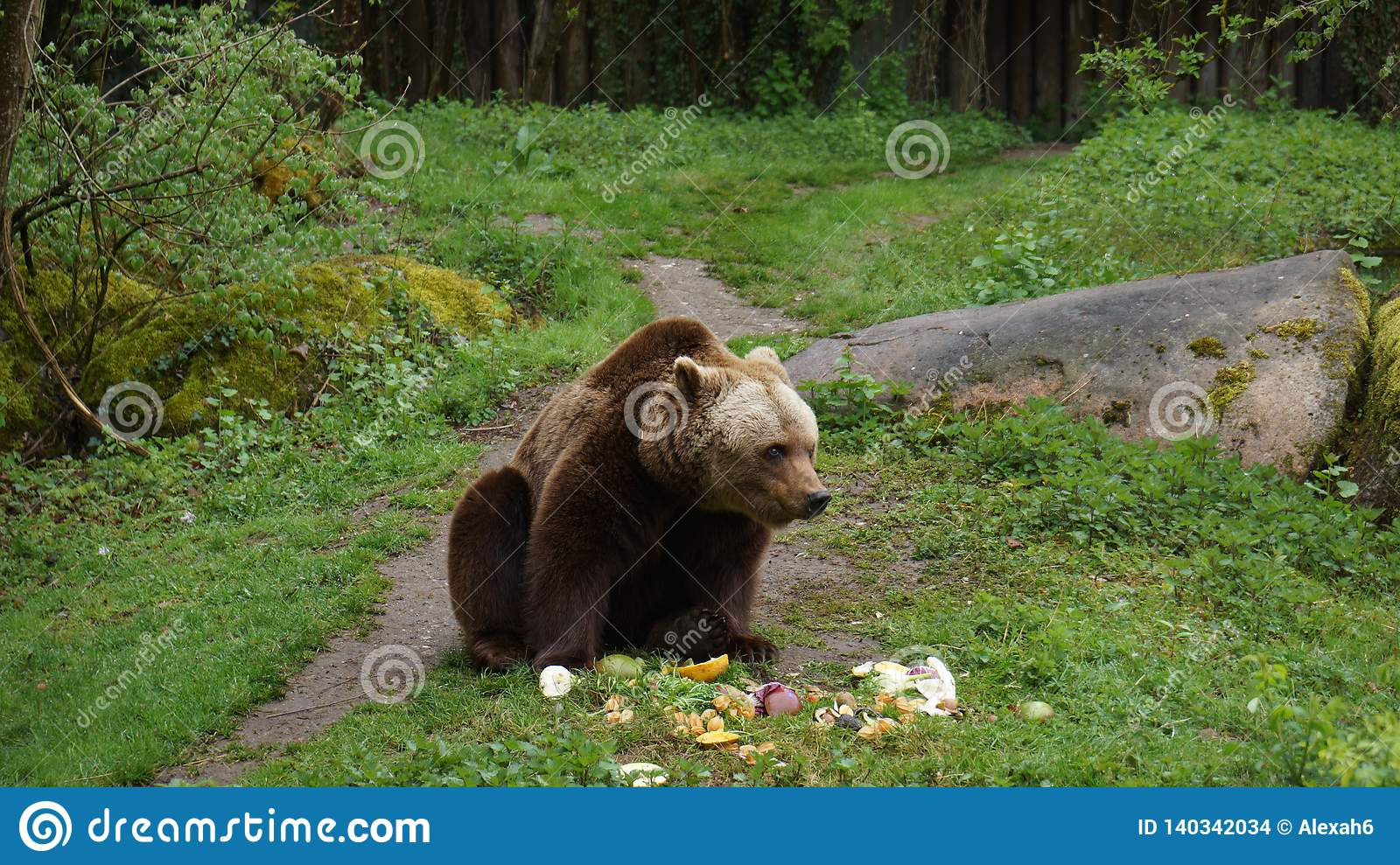 Urso de Brown que come vegetais no prado