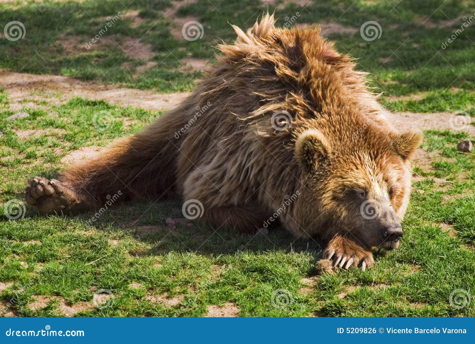 Urso do urso