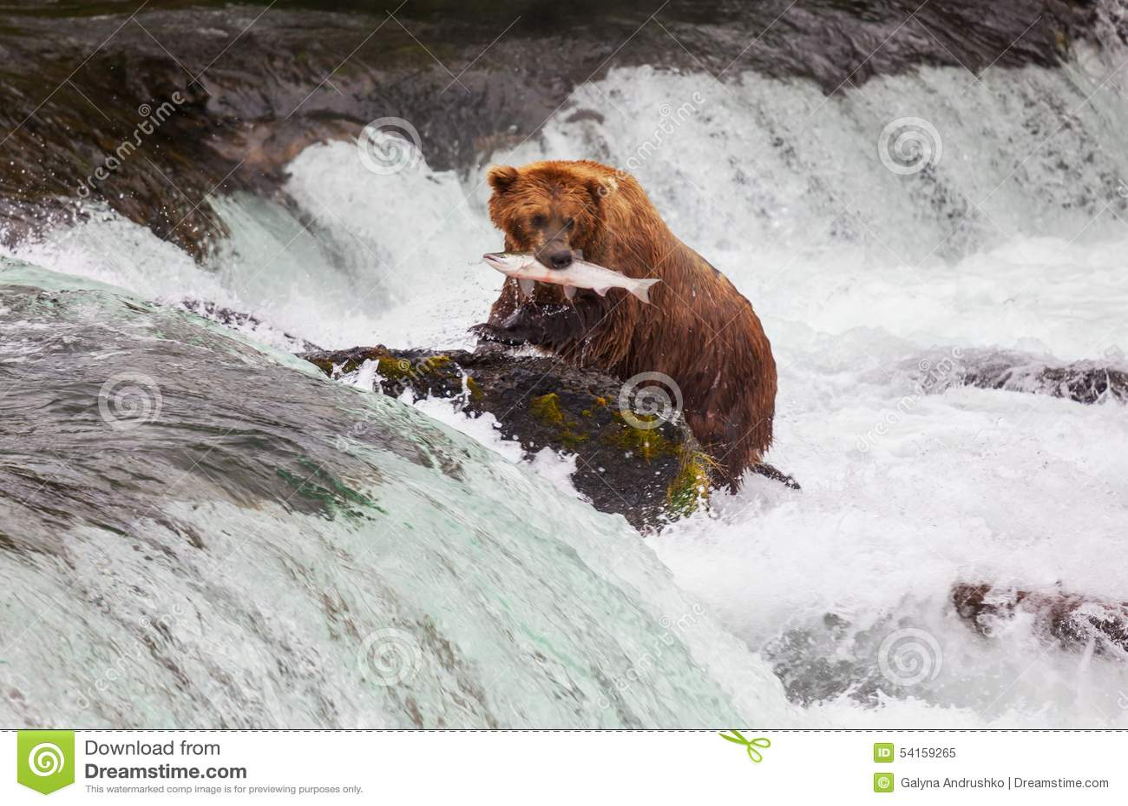 Urso em Alaska
