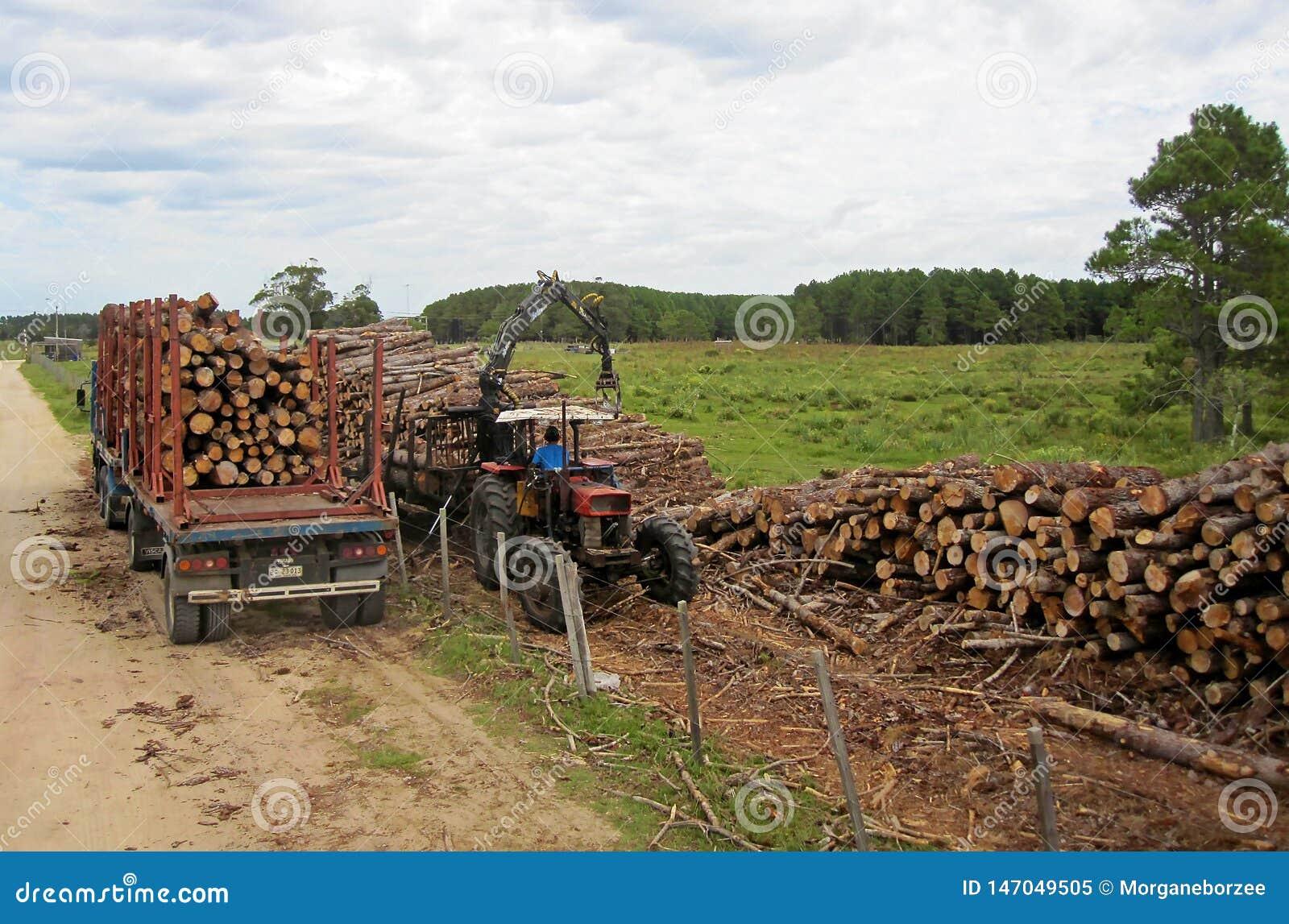 Uruguayan maaimachines die en logboeken met een oude vrachtwagen bewegen vervoeren