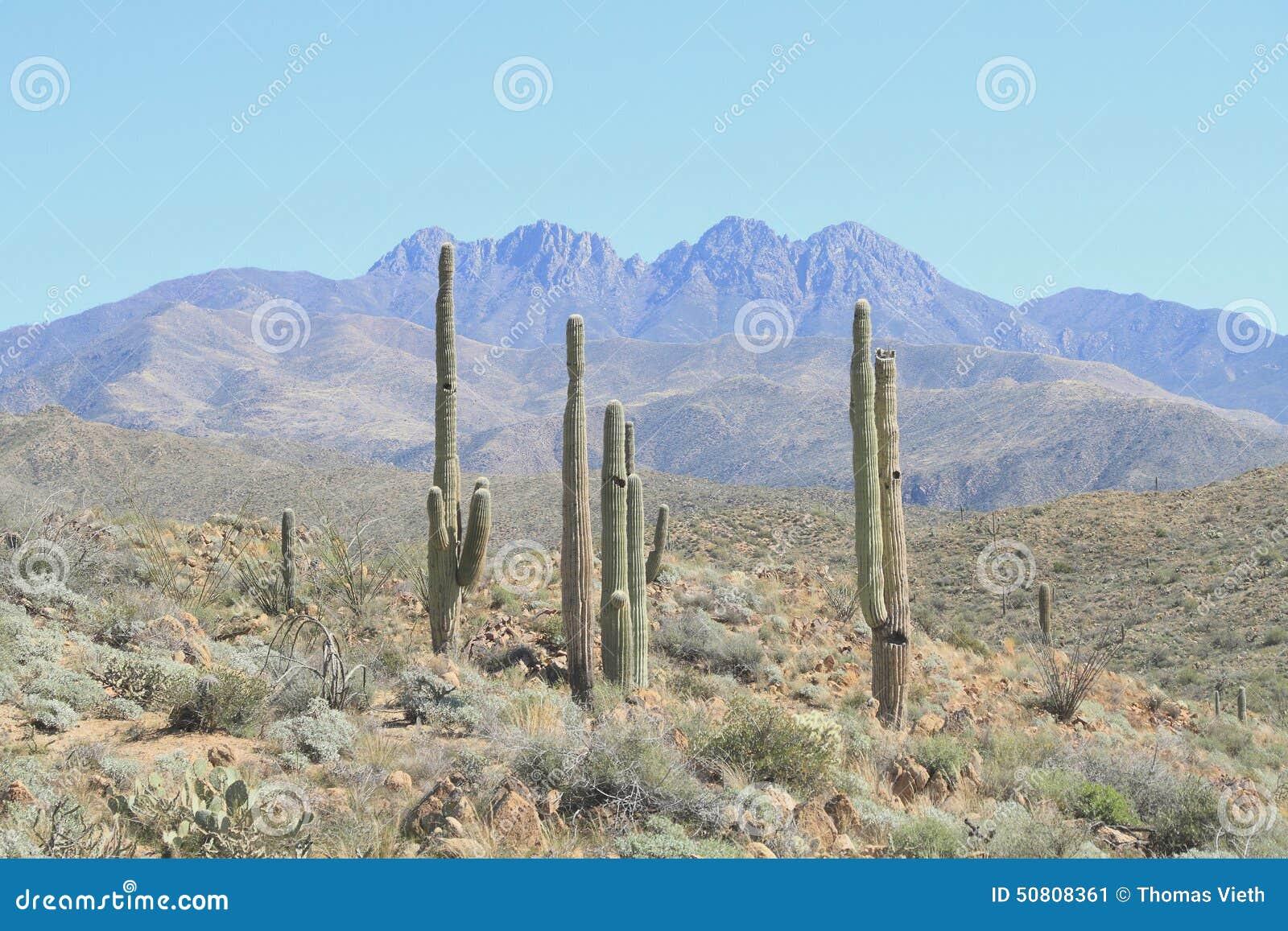 USA, Arizona: Saguaro Landscape at the Foothills of Four Peaks
