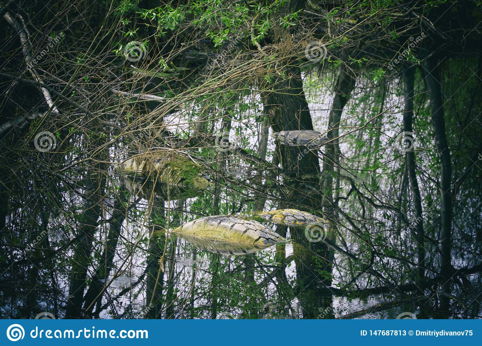 Used tires illegally flooded in a forest pond