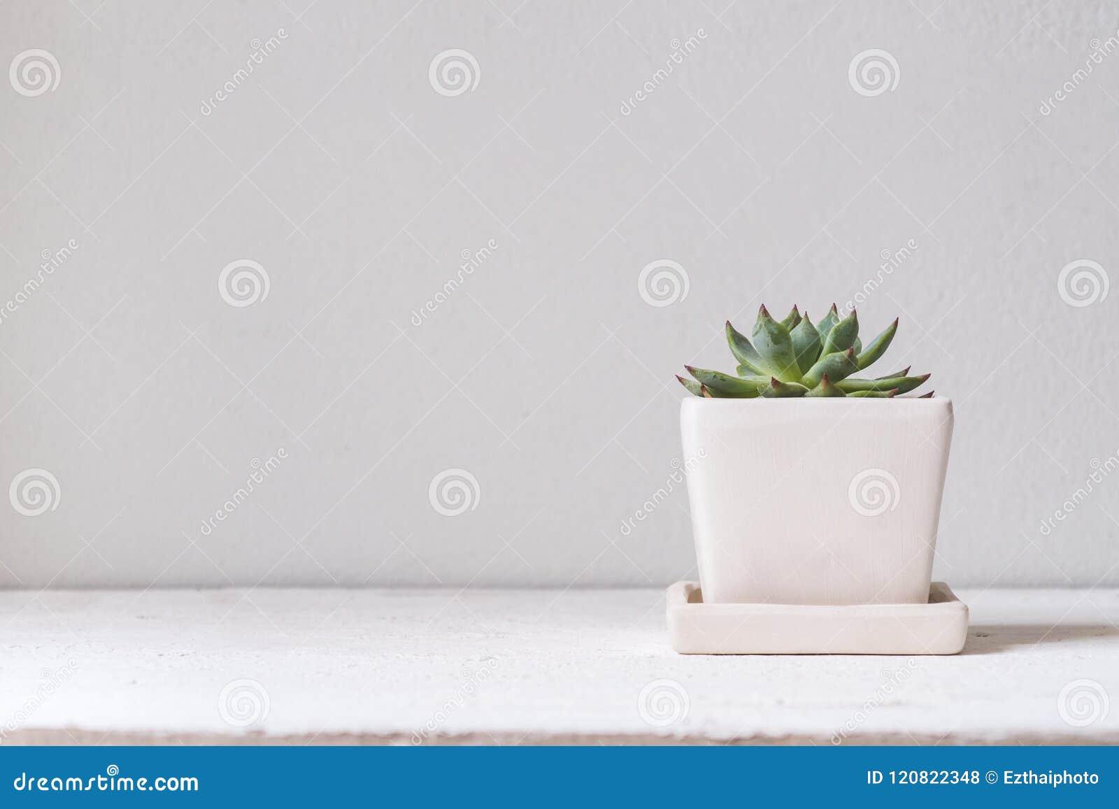 Usine cucculent verte dans le pot de fleur blanche Hous succulent mis en pot