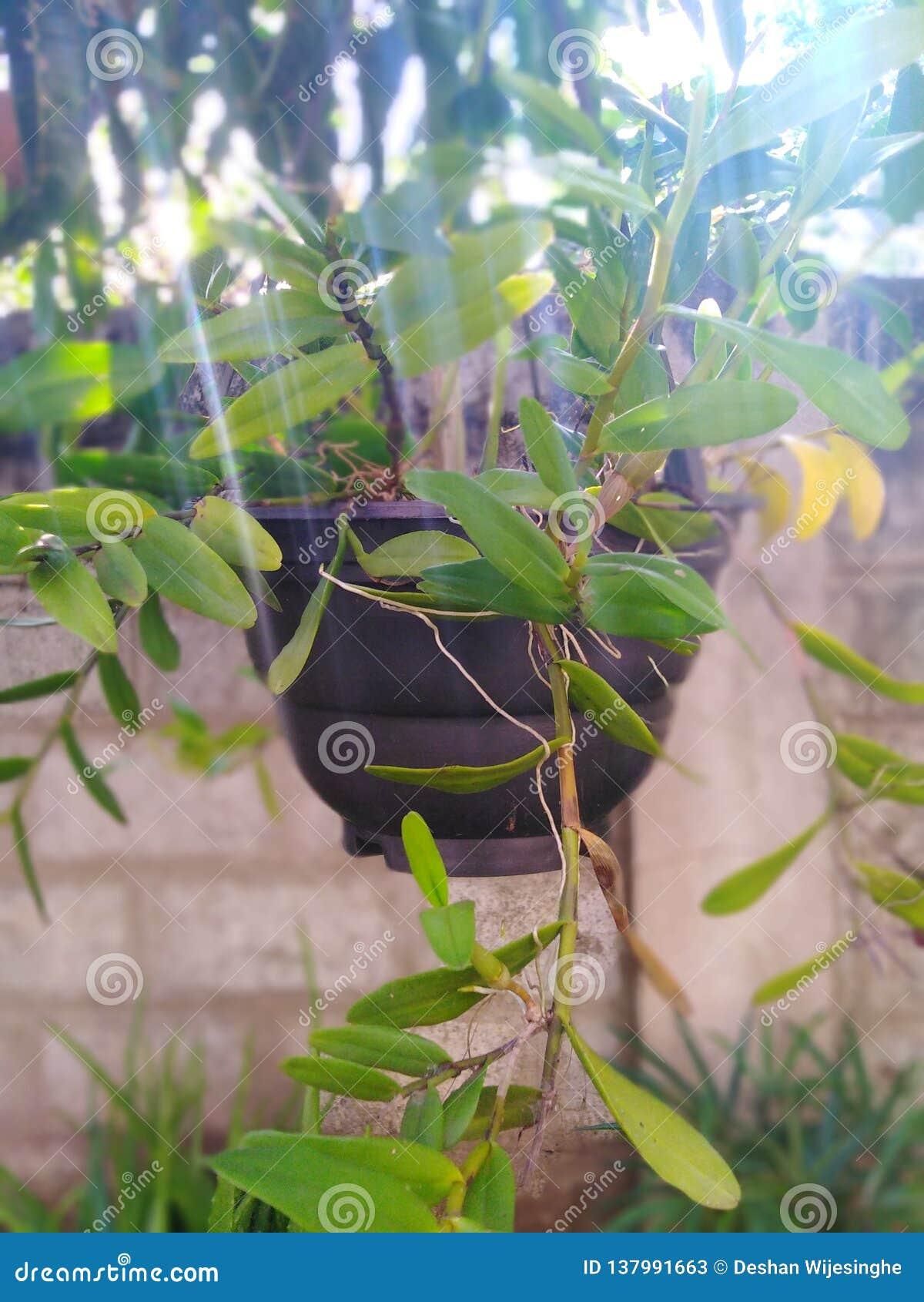 Usine de fleur de plante en pot