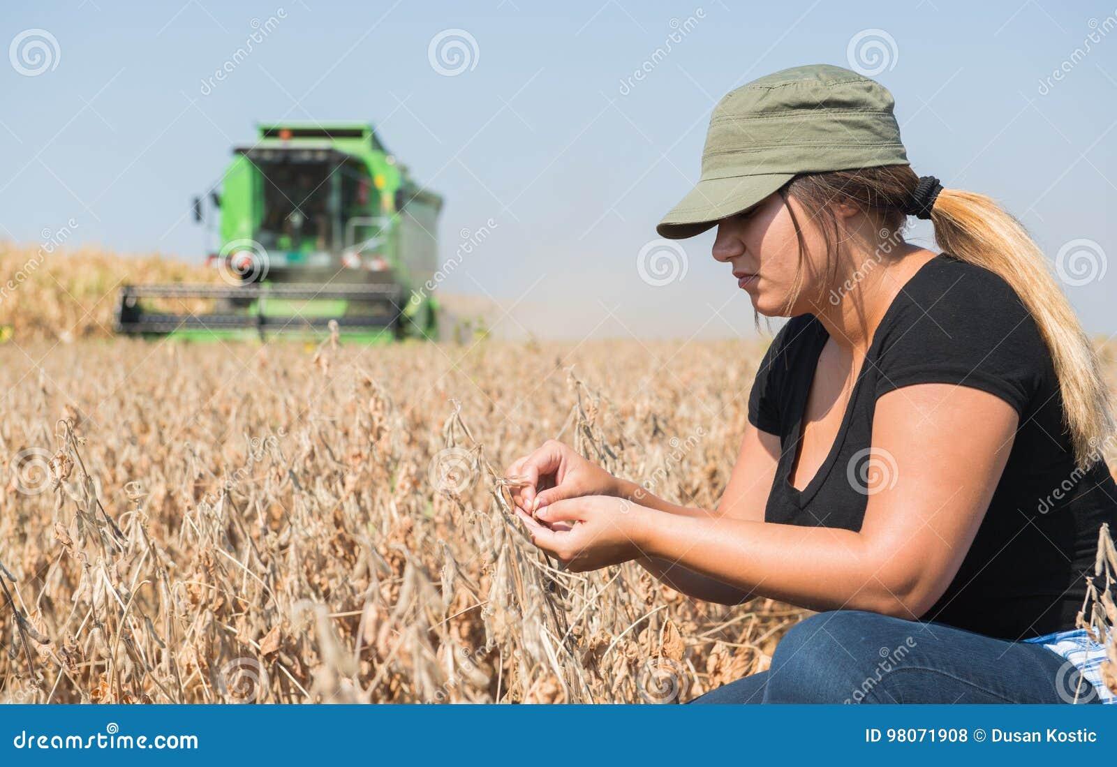Usine de soja examing de fille de jeune exploitant agricole pendant la récolte