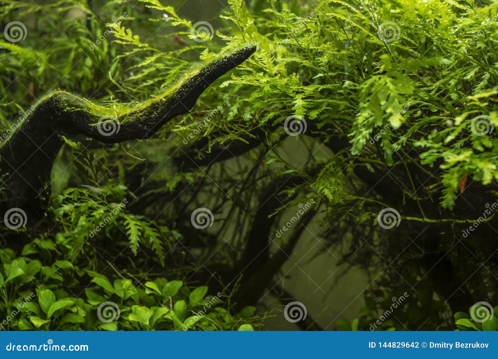 Usine lumineuse sur le fond des algues vertes