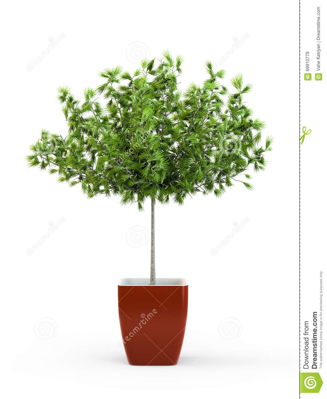 Usine mise en pot de grand arbre vert illustration stock - Arbre en pot terrasse ...