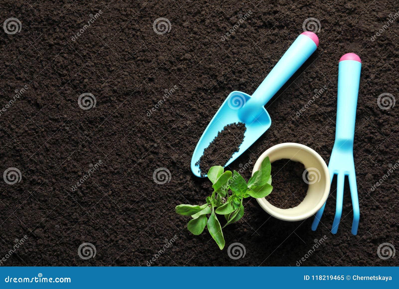 Usine, pot et outils de jardinage sur le sol
