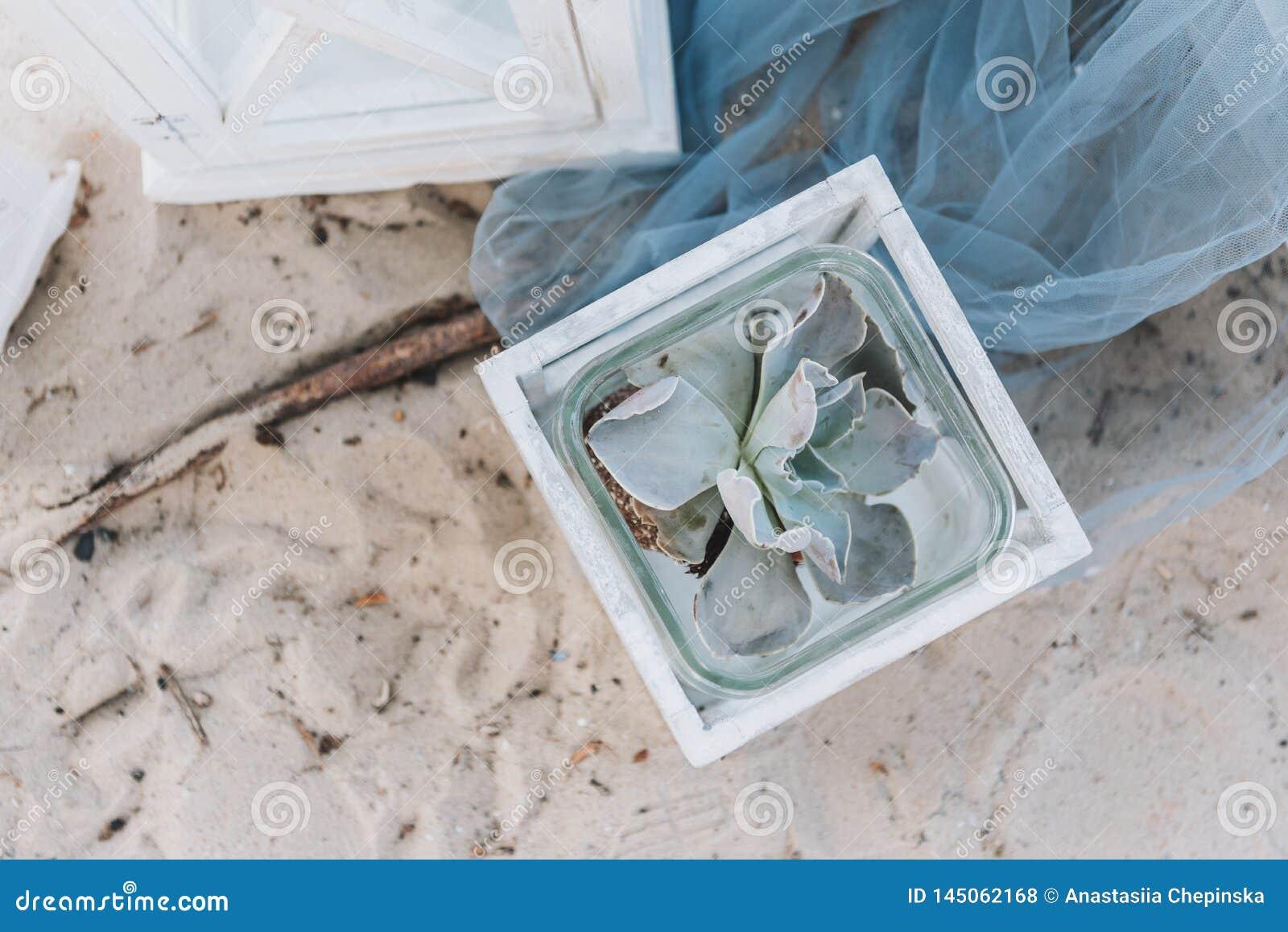 Usine succulente décorative dans un pot sur une plage