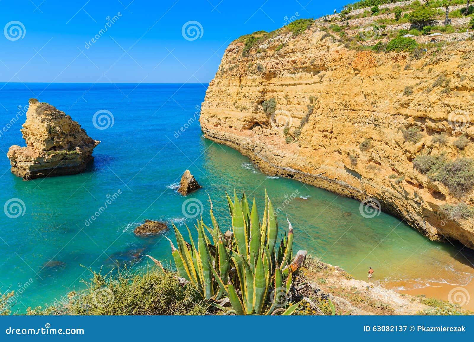 Download Usine Verte D'agave Sur La Belle Plage Image stock - Image du portugais, horizontal: 63082137