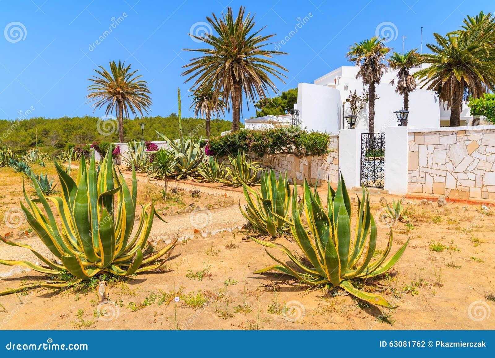 Download Usines D'agave S'élevant Devant Une Maison Photo stock - Image du europe, promenade: 63081762