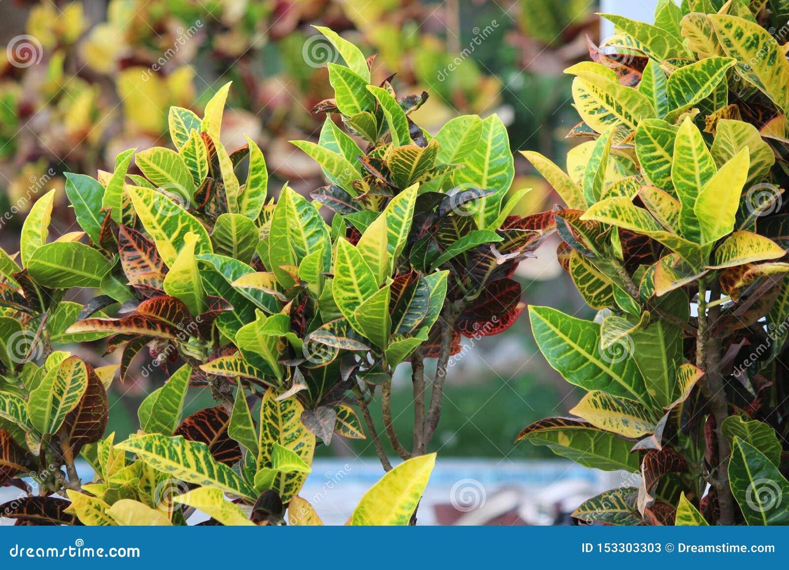 Usines de floraison avec des feuilles