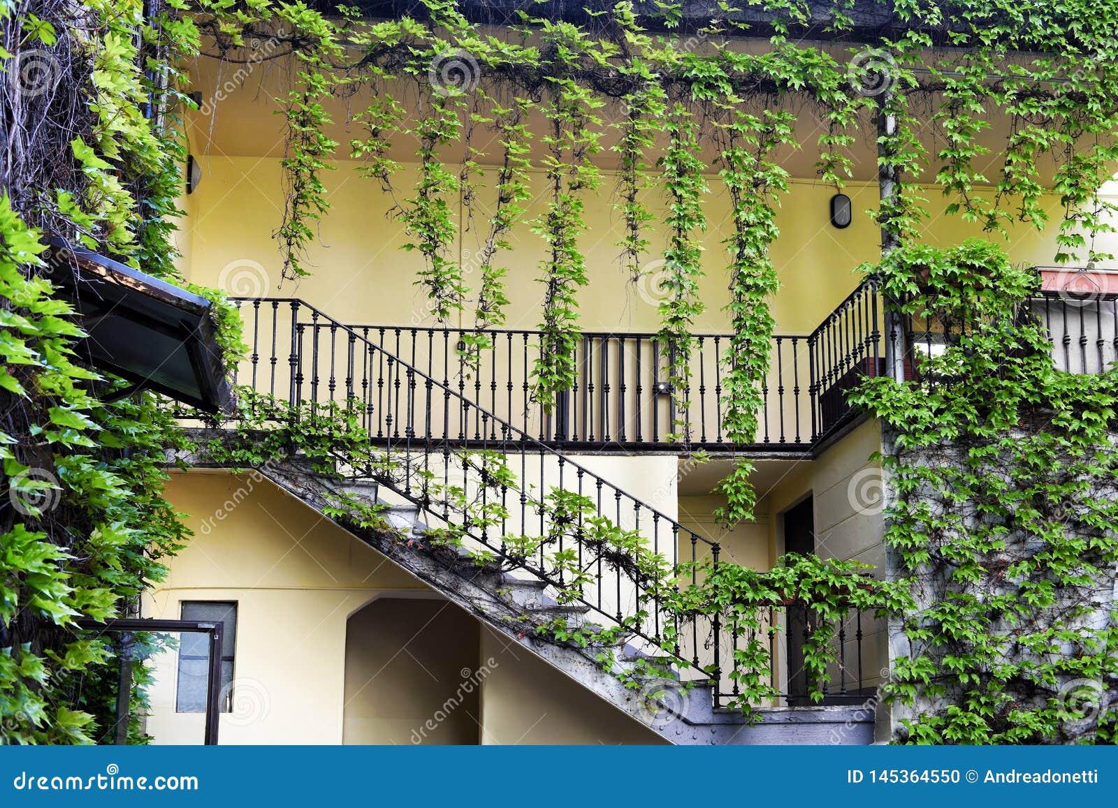 Usines De Plante Grimpante De Lierre Autour Des Escaliers Et Du Balcon Photo Stock Image Du Plante Usines 145364550