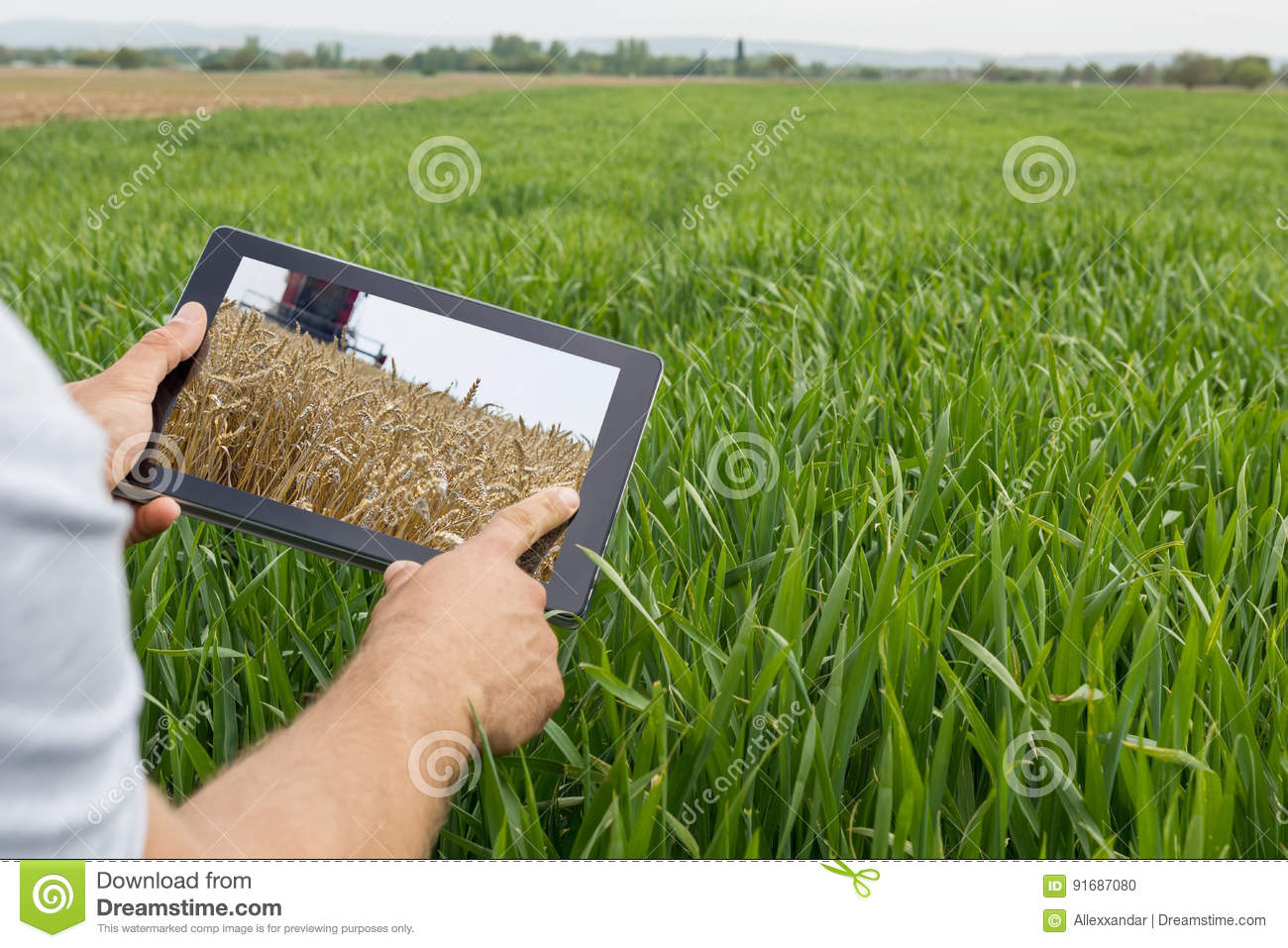 Using Tablet On Wheat Field Modern Agriculture Wheat Futures C